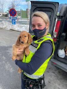 Illegaler Tiertransport: Polizisten kümmern sich um Welpen