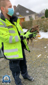Polizisten mit wiederholter Vogelrettung im Cuxland