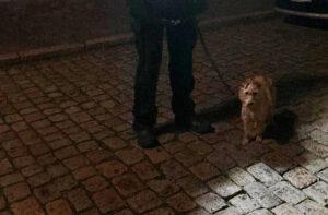 Eisige Temperaturen: Polizisten retten Hund aus engem Käfig in Fahrzeug