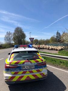 Freund und Schäfer: Verkehrsregelung für Schafherde
