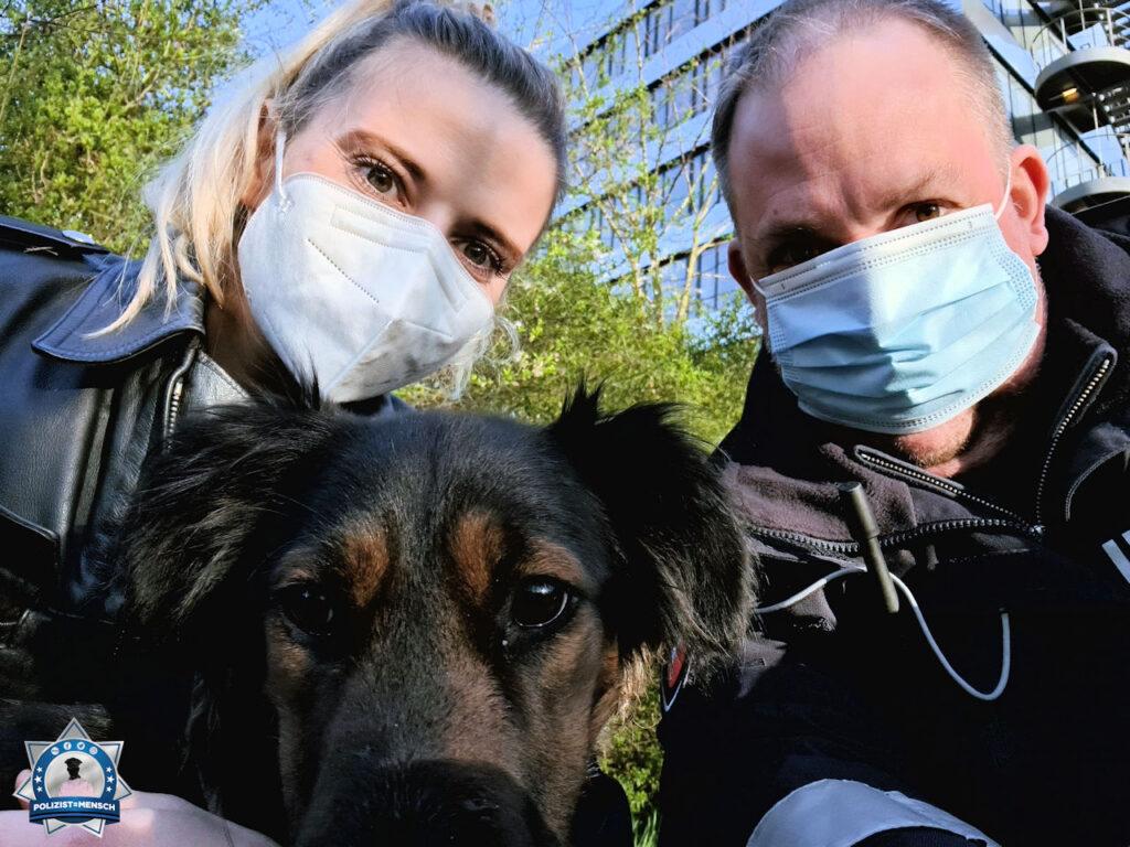 Tierrettung: Abgemagerter Fundhund war an Baum gebunden