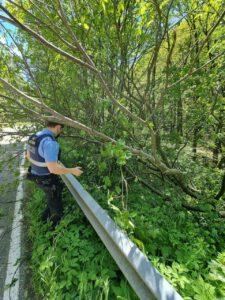 Hilfe für den Freund und Helfer: Autofahrer unterstützt Polizisten bei Beseitigung eines umgestürzten Baumes