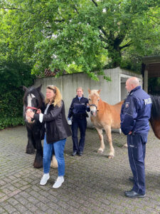 Ausgebüxt: Pferde stellen sich selbst der Polizei