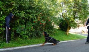 Bissiger Zugriff: Polizeihund spürt mutmaßlichen Einbrecher auf