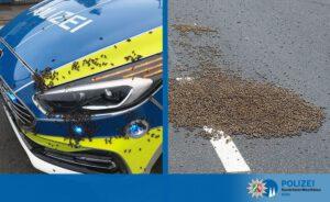 Landung mitten auf der Straße: Polizei, Feuerwehr und Imker retten Bienenvolk