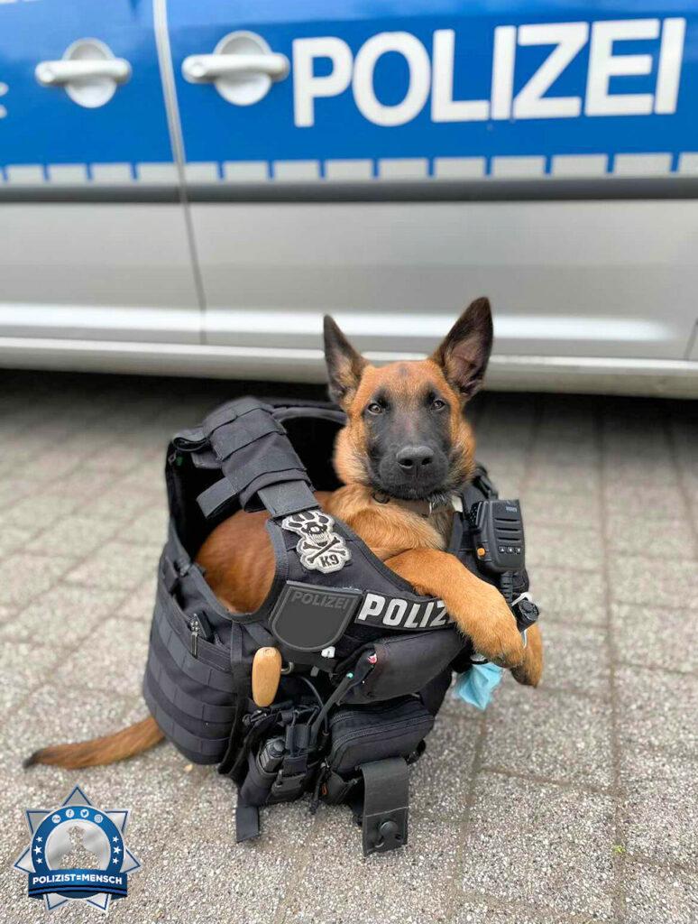 """""""Viele Grüße von Bo, angehender Polizeidiensthund. Der Frühdienst macht ihn immer ein wenig müde."""""""