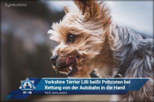 Not amused: Yorkshire Terrier Lilli beißt Polizisten während Rettung von der Autobahn in die Hand