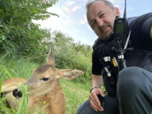 Wiederholungstäter: Polizisten retten Reh zweimal aus einem Kanal