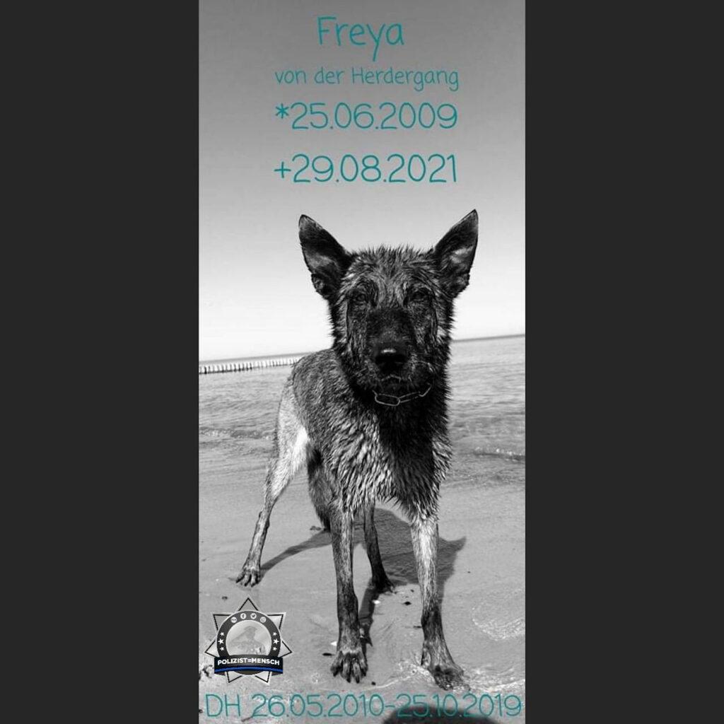 Wir trauern: Freya ging nach kurzer schwerer Krankheit über die Regenbogenbrücke