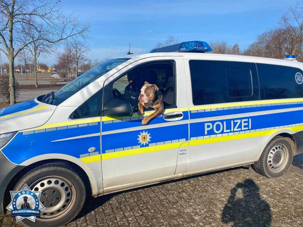 """""""Ganz liebe Grüße von (Ucker Bulldogs) Friedrich, der bei meinem Mann ab und zu mal (Bundes-)Polizist spielen darf 🙂 Zur Verbrecherjagd eignet er sich aber nicht, da er einfach jeden Menschen liebt. 😅 LG, Dani"""""""