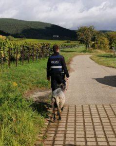 Polizeilicher Begleitschutz: Schaf auf Erkundungstour